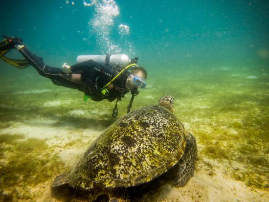 Badladz Dive Resort: Diving With Sea Turtles