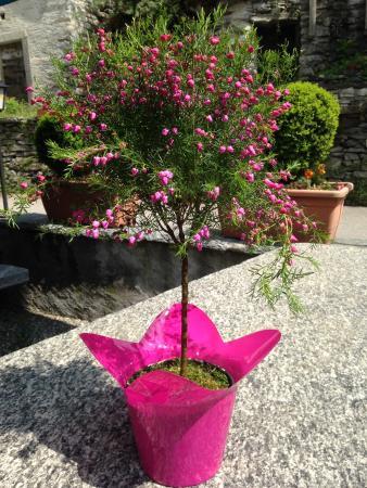 Gordevio, Швейцария: Fiore di Cuori