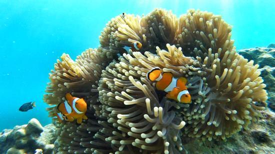 Khuraburi, تايلاند: Les poissons-clown