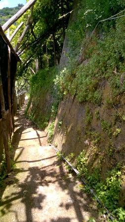 Sentiero dei Limoni