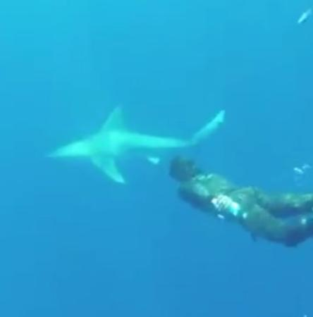 Jupiter, FL: Our dive guide swimming up to a sandbar shark