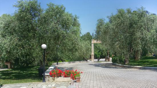 Pachis, Hellas: olive trees!!!