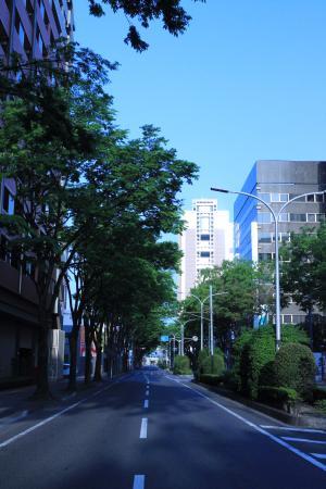 Maebashi Ekimae Japanese Zelkova Tree-lined Avenue
