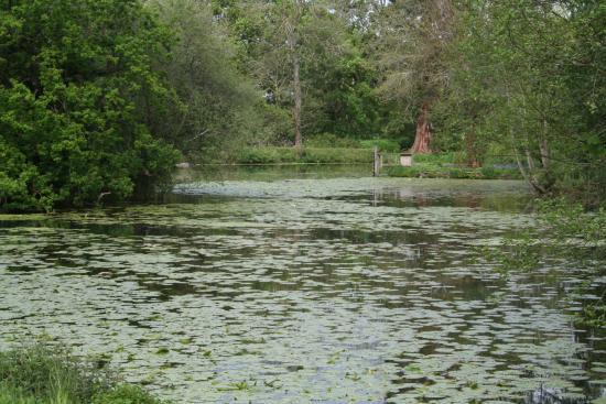 Onibury, UK: Lake at the bottom of the gardens