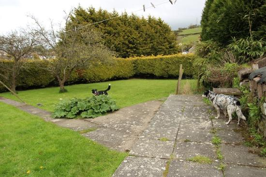Betws yn Rhos, UK: The garden - plenty of space for the dogs to play