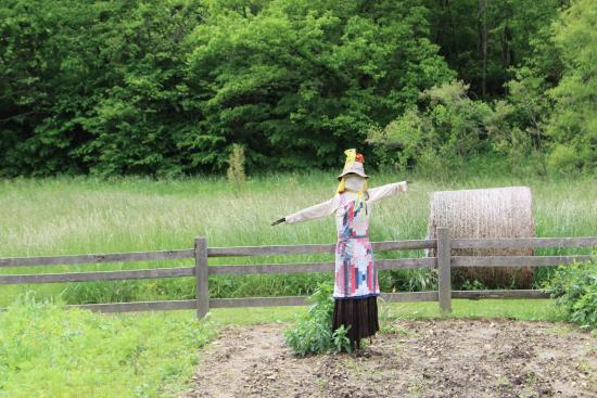 Irvine, KY: Barbara's salad garden scarecrow, perhaps practicing an obscure form of Appalachian yoga