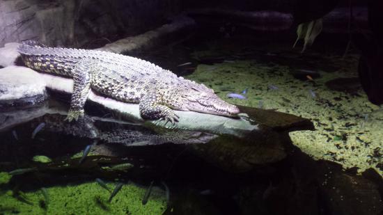 Beautiful Fish. - Picture of SEA LIFE London Aquarium