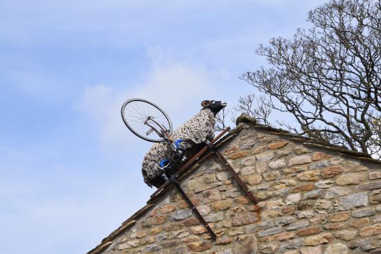 Fremington, UK : I'm not sure but it looks as if the sheep has won!