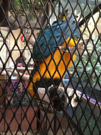 Mesilla, Nouveau-Mexique : Silly bird