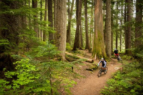 Cross country biking on Whistler's trails