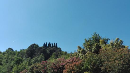 Sasso Marconi, อิตาลี: CIPRESSI SULLA COLLINA