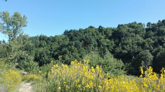 Sasso Marconi, อิตาลี: VEGETAZIONE FLOREALE