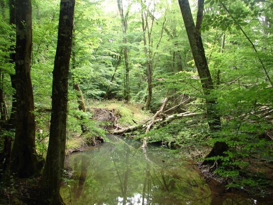 Igneada Longoz Ormanları Milli Parkı