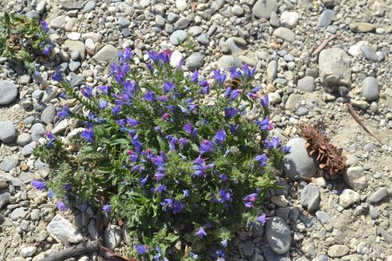 Lake Hawea, Yeni Zelanda: Lovely little flowers
