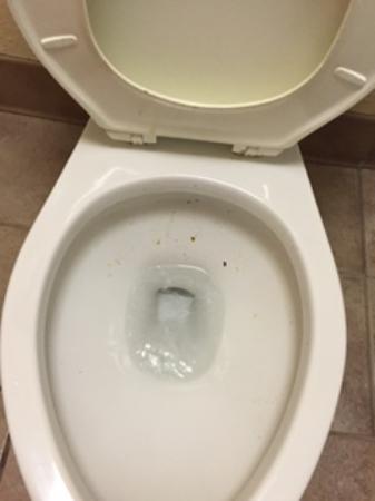 Quality Inn Aiken: Quality Inn, Aiken, SC - toilet condition upon check in 5/21/2016