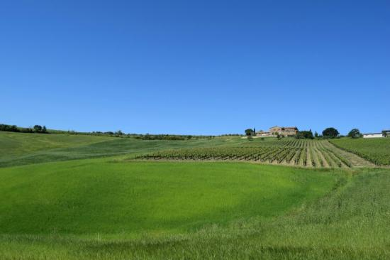 Castel del Piano, Italia: Podere del Vescovo