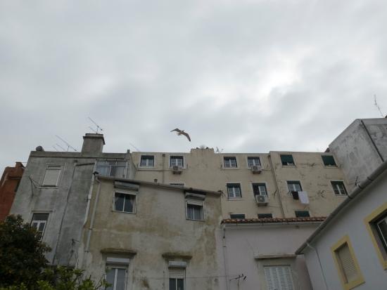 Casa do Patio by Shiadu: Наши окна справа от чайки