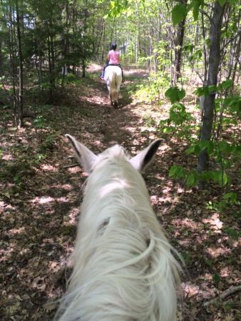Carousel Horse Farm: photo0.jpg