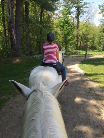 Carousel Horse Farm: photo1.jpg