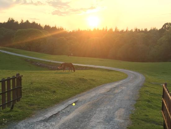 Muckross Riding Stables B&B: Horses grazing at sunset. Heavenly.
