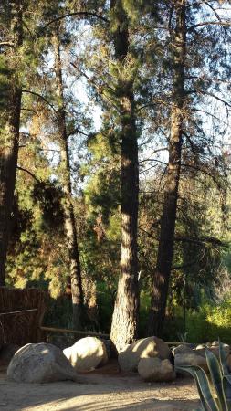 Foto de Reserva Ecologica Oasis de la Campana