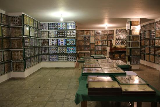 ‪Entomological Museum of Volos‬