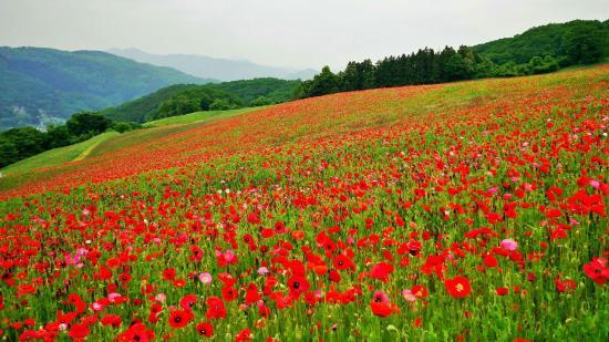 Chichibu Kogen Farm