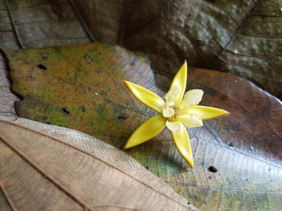 Uvita, Costa Rica: Rapel