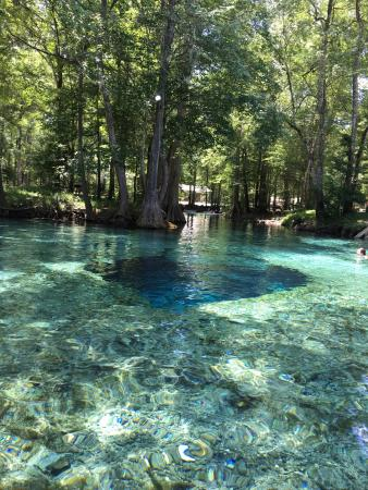 Ginnie Springs: May 2016