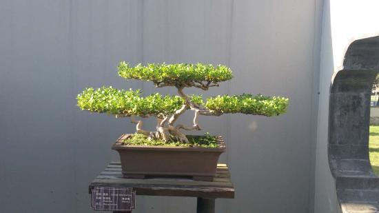 Yangzhou style Bonsai