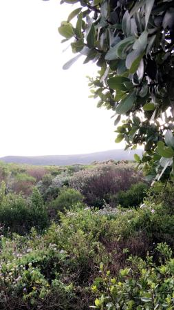 Horse Riding Grootbos Private Nature Reserve: photo0.jpg