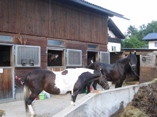 Velden am Woerthersee, Áustria: Около конюшни