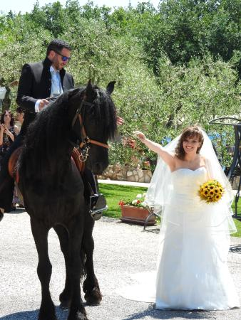 Gallicano nel Lazio, Italia: Matteo, il cavallo nero
