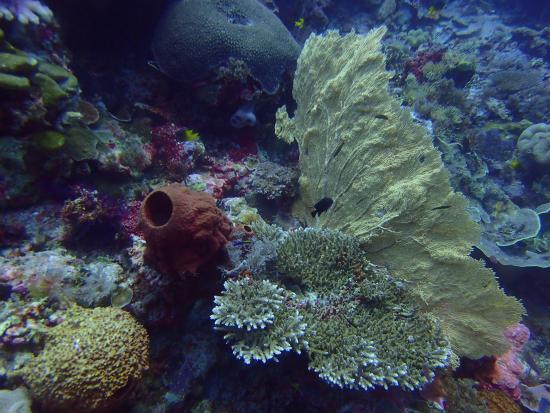 Остров Вакатоби, Индонезия: Underwater landscape