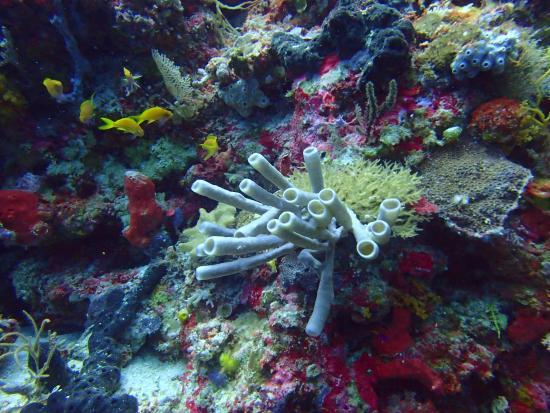 Wakatobi, Indonesia: Underwater landscape