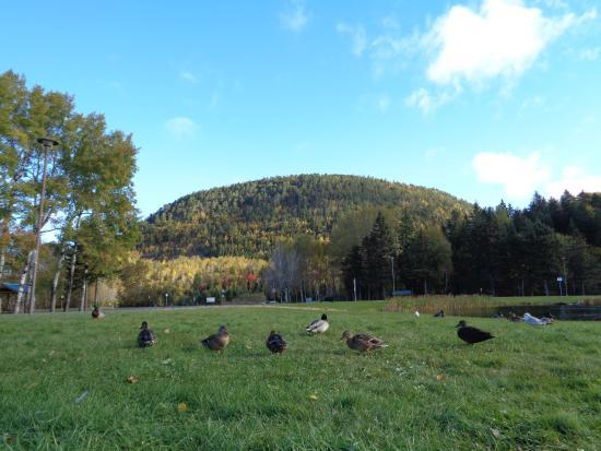 Campbellton, Καναδάς: Sugarloaf Provincial Park