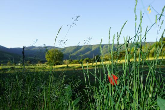 Landscape - Picture of Villa di Piazzano, Piazzano - Tripadvisor