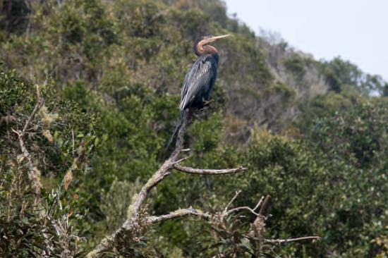 Wilderness, Sudáfrica: Cormorant