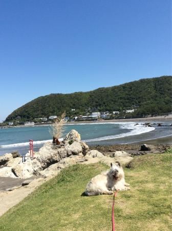Isshiki Beach: 一色海岸