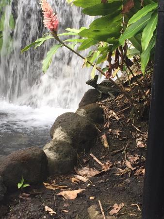 Tabacon Grand Spa Thermal Resort: Zona de aguas termales.