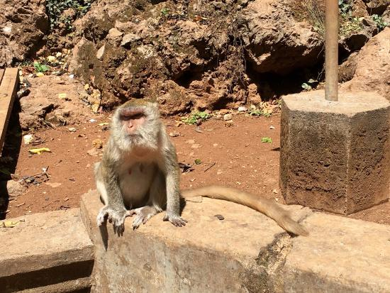 Wat Suwan Kuha (Cave Temple): photo6.jpg