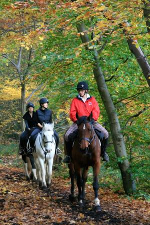 intensive 4 days horse riding course review of trent park equestrianintensive 4 days horse riding course trent park equestrian centre