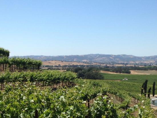 Uncorked Wine Tours: Lovely Paso Robles wine country