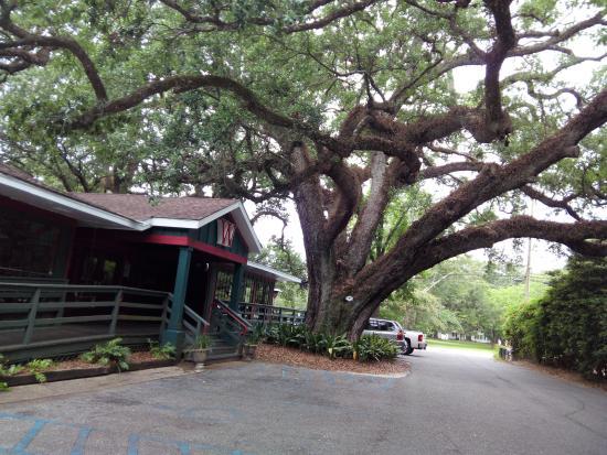 Wintzell S Oyster House Restaurant Under A Huge Live Oak Tree