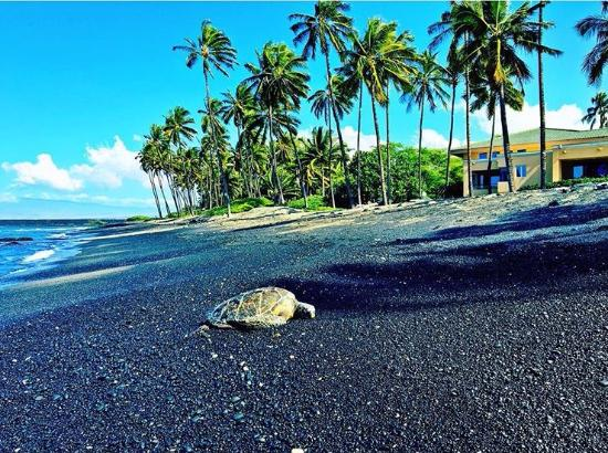Kona Island Hawaii Things To Do