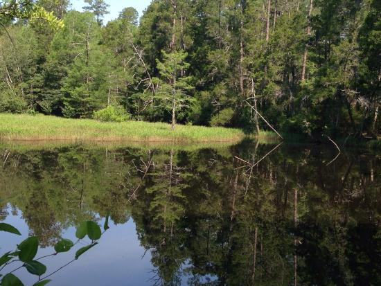 Milton, FL: Enjoyed walking hiking trails at black water river state park