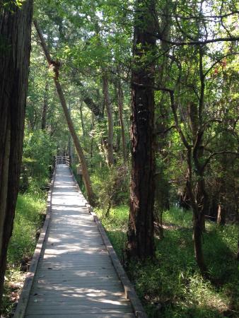 Milton, FL: Enjoyed walking hiking trails at black water river state park