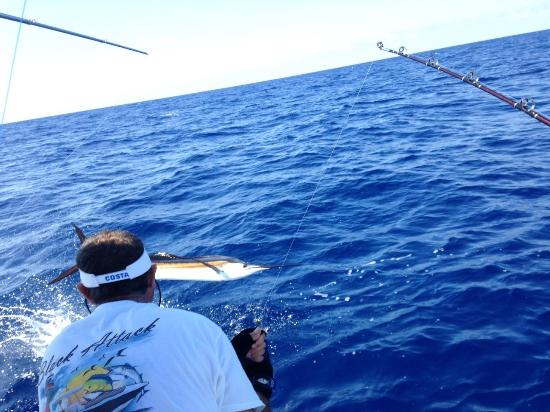 Jupiter, FL: Sailfish passing by as angler works it to boat