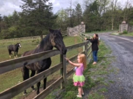 "Lost River, Virginia Occidental: Feeding ""Leah"" and ""Emma"" - the two horses who greet you when you arrive!"