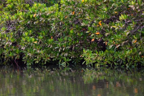 Mar Lodj, Senegal: les mangroves que nous a fait visiter l'hôte avec son bateau